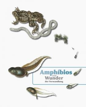 Amphibios - vom Wunder der Verwandlung